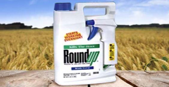 Roundup-Monsanto:-altri-5-motivi-per-mettere-al-bando-il-glifosato